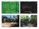 Área de pouco e vias de escoamento das árvores selecionadas
