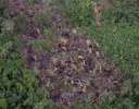 Local 1 - Desmatamento corte raso detectado em imagem Sentinel 1 e apontada pelo DETER
