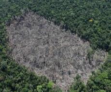 Local 2 - Desmatamento corte raso detectado em imagem Sentinel 1 e apontada pelo DETER