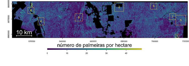 Número de Palmeiras por hectare na Amazônia