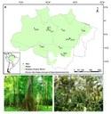 Distribuição dos locais estudados na Floresta Amazônica brasileira